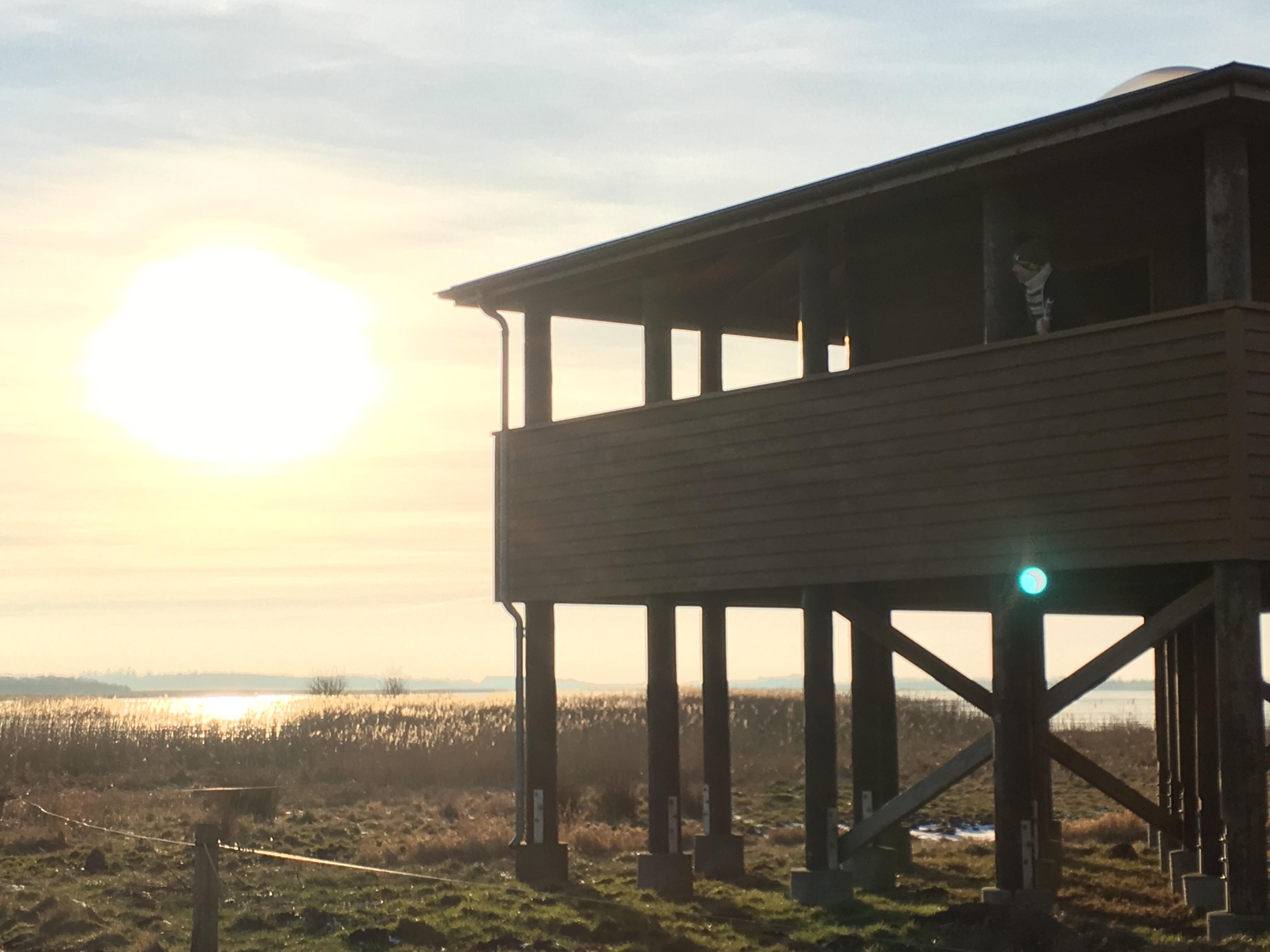 Fra Vilstedtårnet er der udsigt ud over fuglereservatet ved Vilsted Sø.