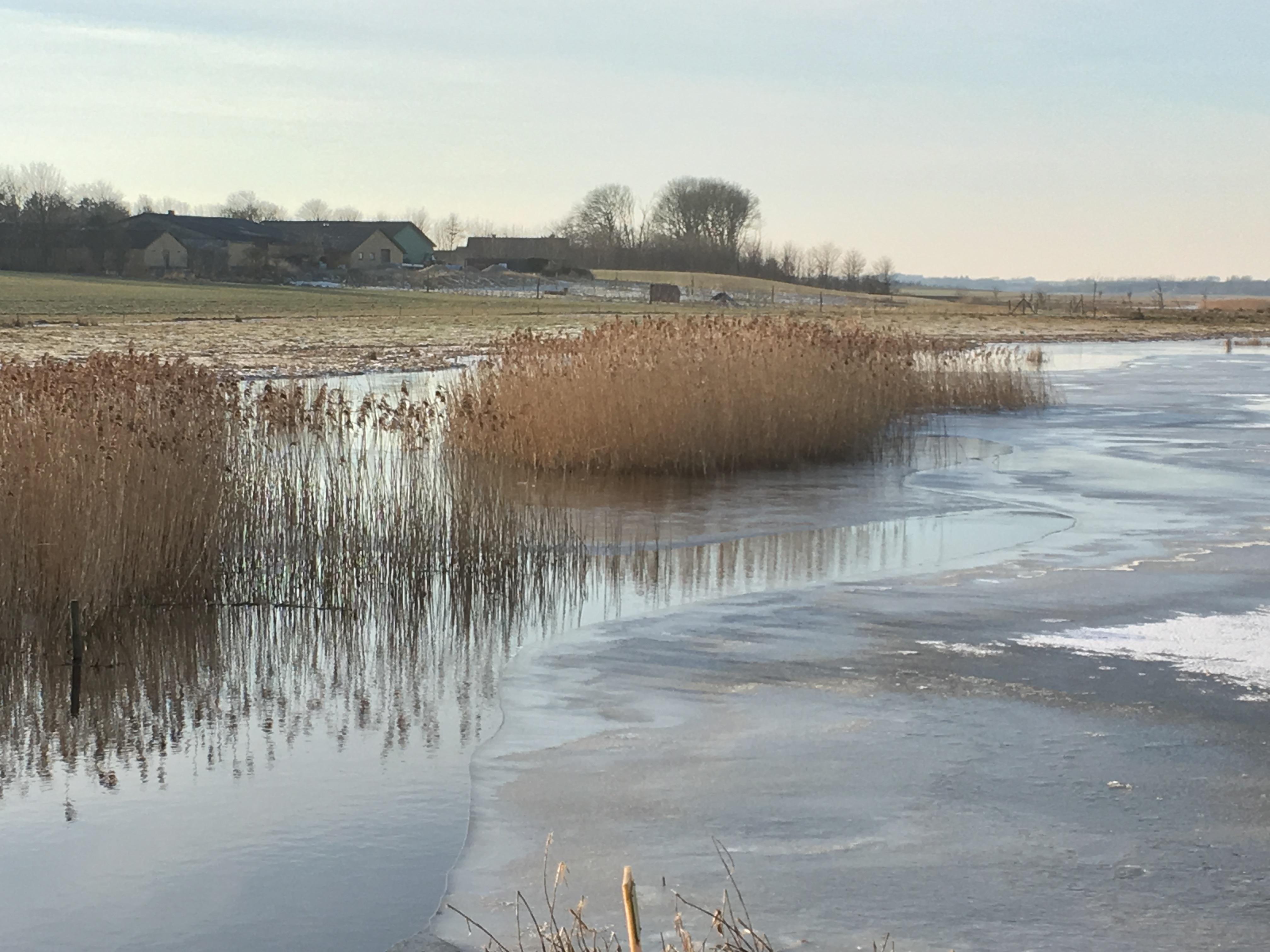 Vilsted Sø er 450 hektar stor og blev genskabt i 2006.